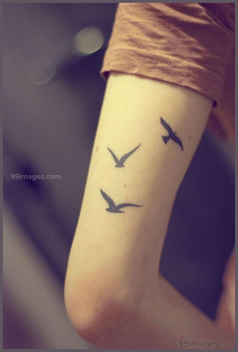 Best Small Tattoos For Men Hd Images 13843 Smalltattoosformen Tattoos Bird Tattoos Arm Small Tattoos For Guys Arm Tattoos For Guys