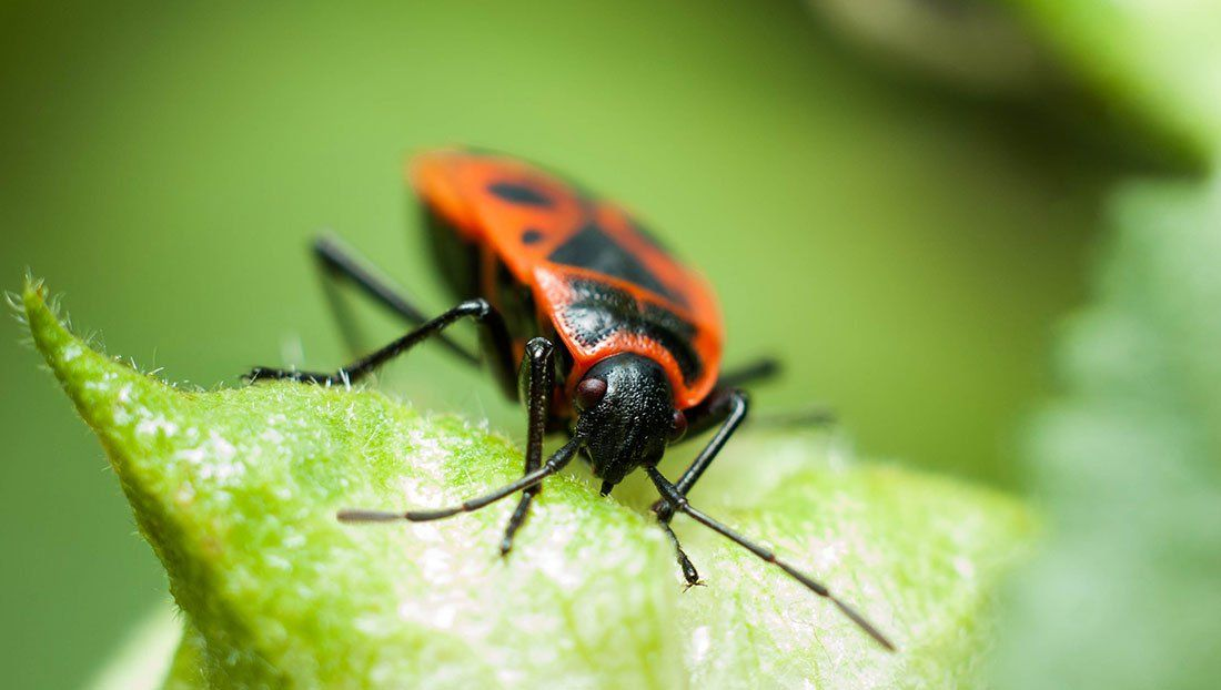 Moore Quality Pest Control Local Family Business