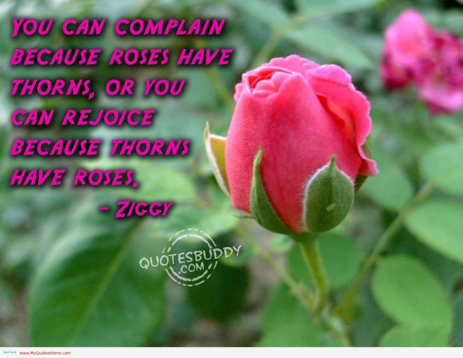 Image Result For Life Is Great Flower Quotes Beautiful Flower Quotes Flower Quotes Beautiful Rose Flowers