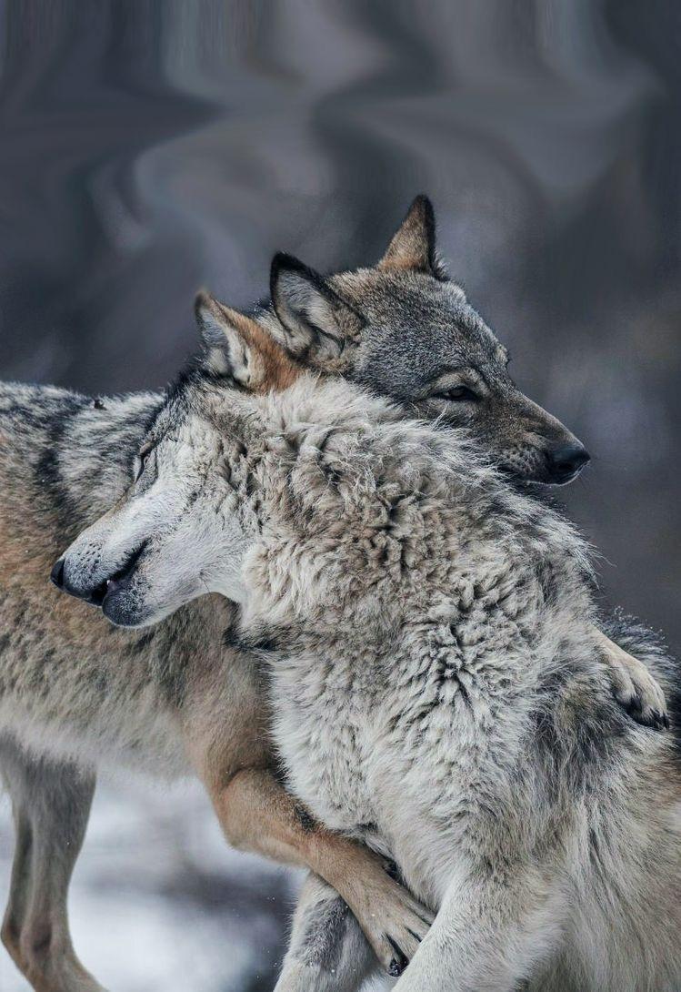 Pin Von Anna Auf Wolfe Wolf Hunde Tiere Tiere Wild