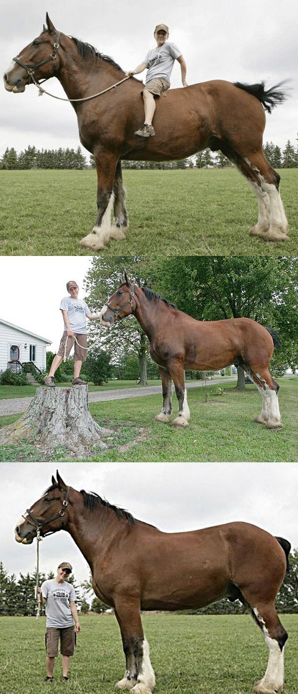 pin by jackie smith on things you may never have seen before rh pinterest com