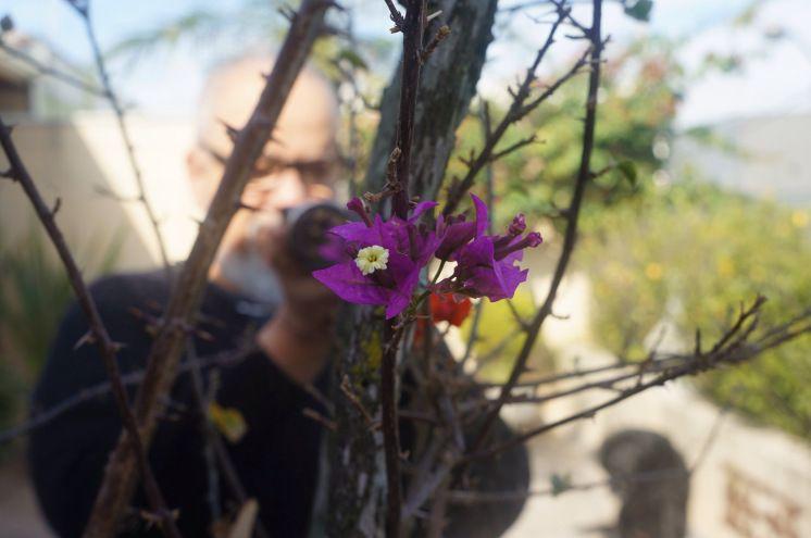 Bom Dia! Flor do Dia! Um pouco de cor nesse dia cinza  #flordomeujard...