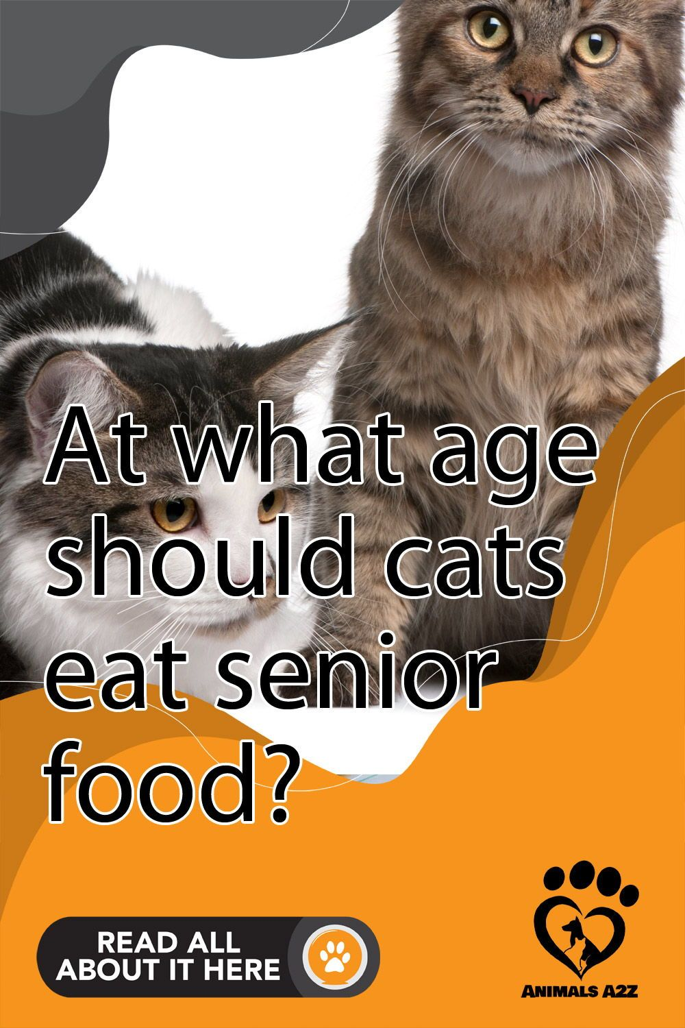 At What Age Should Cats Eat Senior Food At What Age Should Cats Eat Senior Food In 2020 Older Cats Senior Cat Food Senior Cat