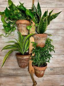 Pflanze Aufhänger hängen Pflanzer Garten Holz Pflanzer Indoor oder Outdoor-Kräuter saftig Blume Pflanze Halter 4 Topf Pflanze Stand