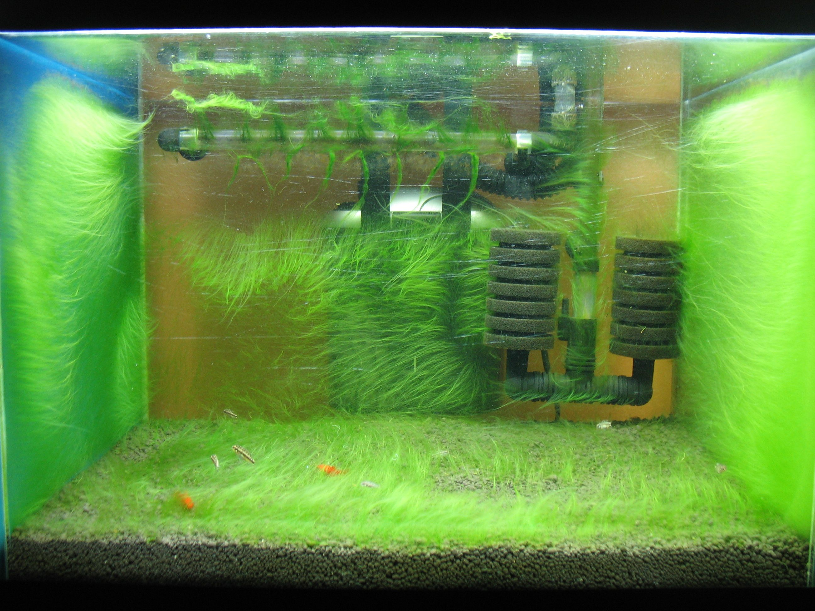 Fish tank in home place - This Might Make A Nice Grow Out Or Shrimp Tank If A Hiding Place