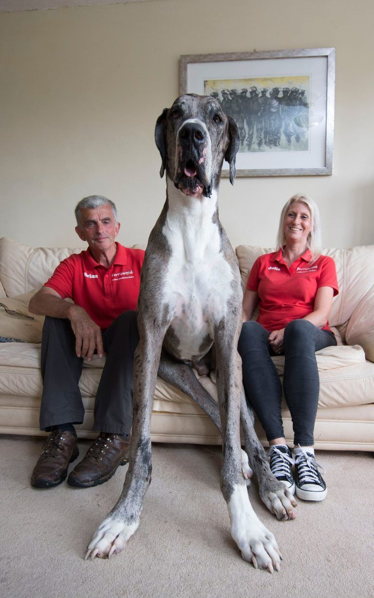 30 Gigantic Dogs In The World You Won T Believe Are Actually Real