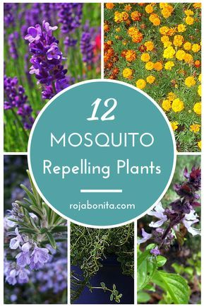 12 Gorgeous Mosquito Repelling Plants | Dress up your patio and enjoy chemical free protection