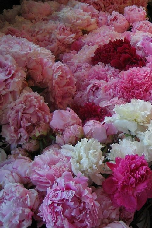Bright pink flowers, perfect for a spring wedding