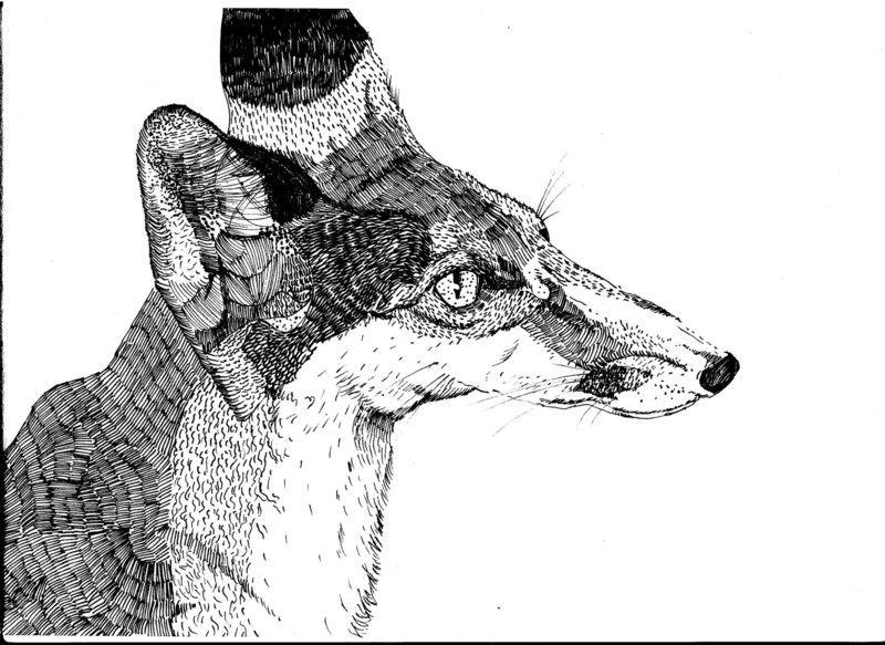 Original-Zeichnung auf gelbstichigem Papier