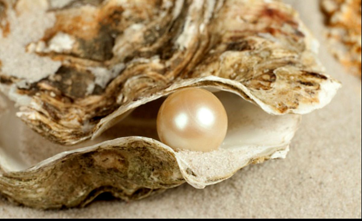 This Pearl Represents Natural Shape Because It Is Formed