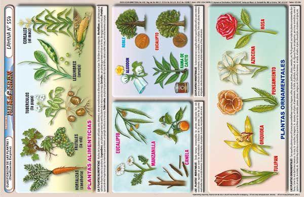 L minas educativas para todos los niveles for school for Plantas ornamentales con sus nombres lamina
