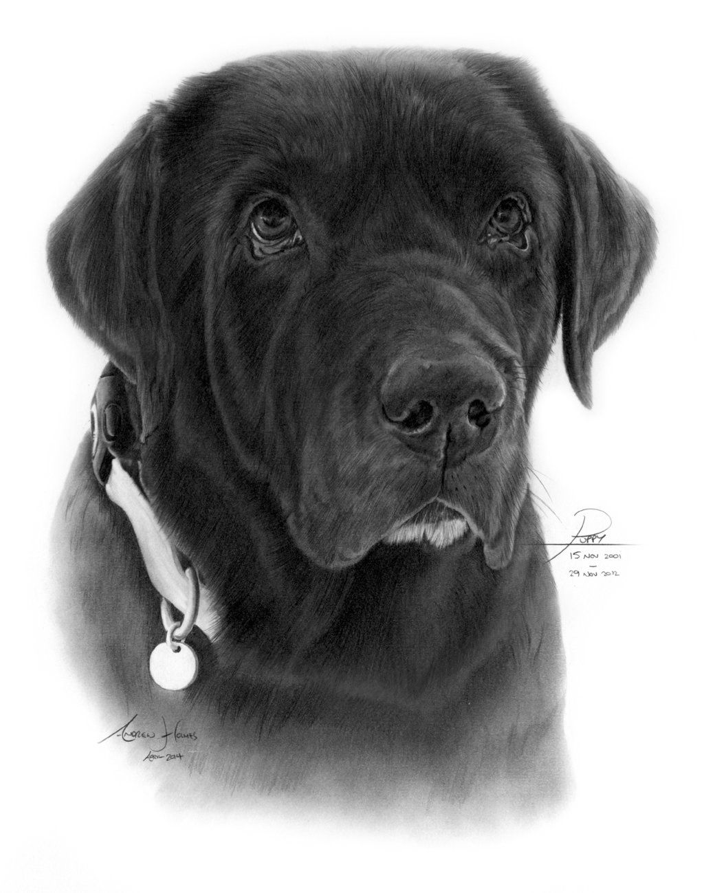 Commission Chocolate Labrador By Captured In Pencil Deviantart Com