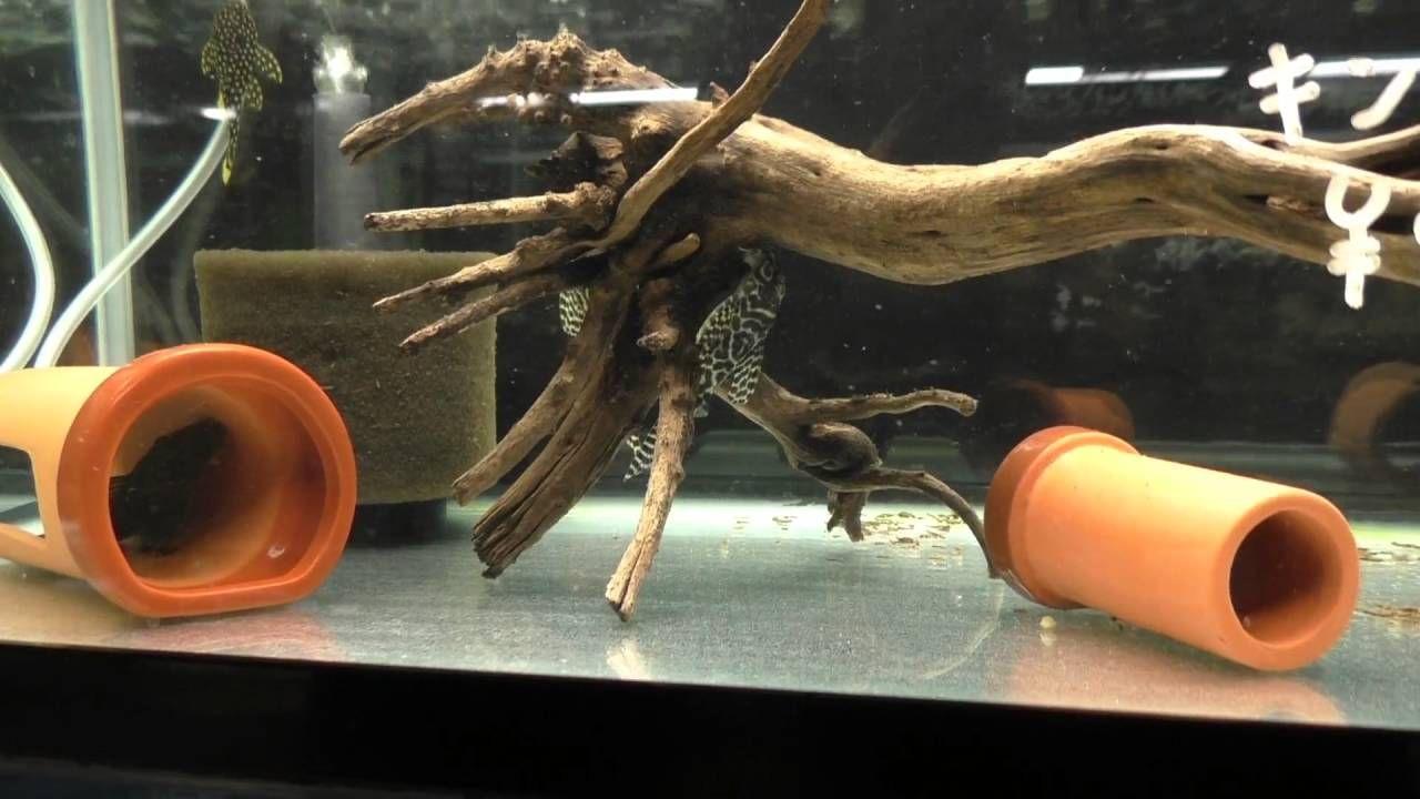 Fish aquarium japan - Fish Store Tours 3 Pet Freek In Kyoto Japan Fish Store Aquarium Shop