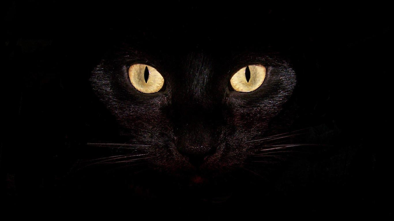 Wallpaper Black Cool Dark Laptop Background In 2020 Cat Wallpaper Cat Pokemon Scary Cat