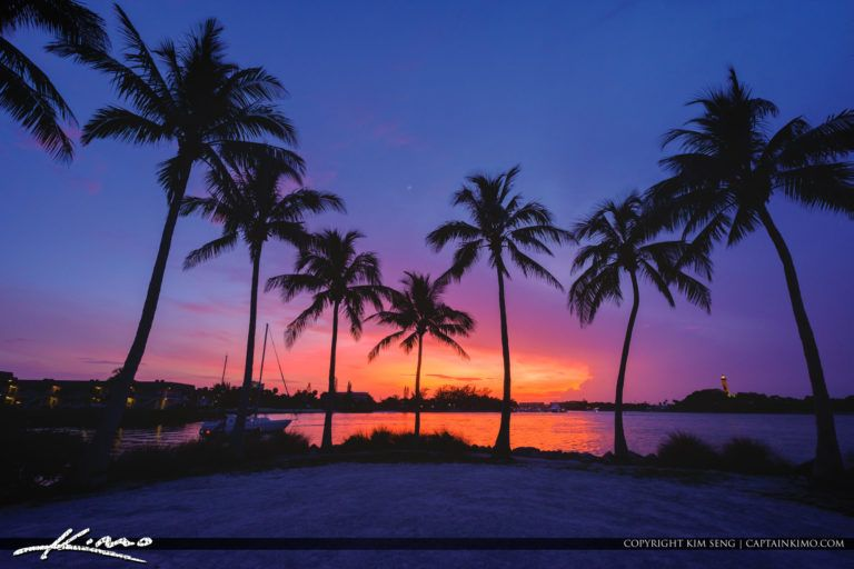 Jupiter Inlet Coconut Trees Sunset At Dubois Juno Beach Tree