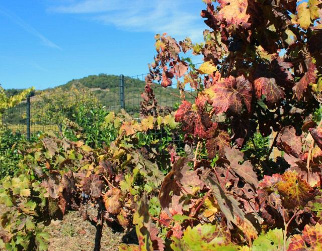 Getaway to Sonoma Valley Wine Country on Stylemindchic Lifestyle Blog. #Sonoma #Sonoma Valley #Wine Country #Glen Ellen #travel