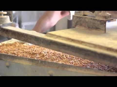 Fluke's Farm Tour : Mealworms Facility - YouTube