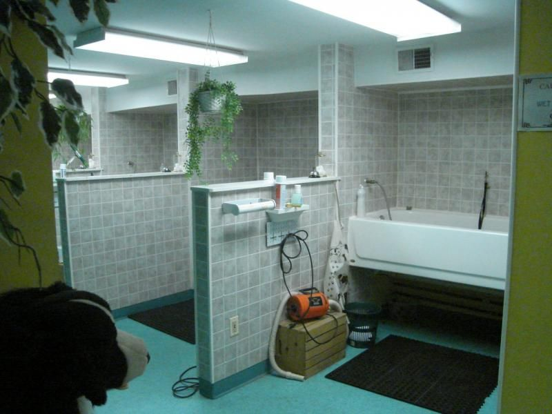 Dog grooming salon bathing areas google search grooming salon dog grooming salon bathing areas google search solutioingenieria Choice Image