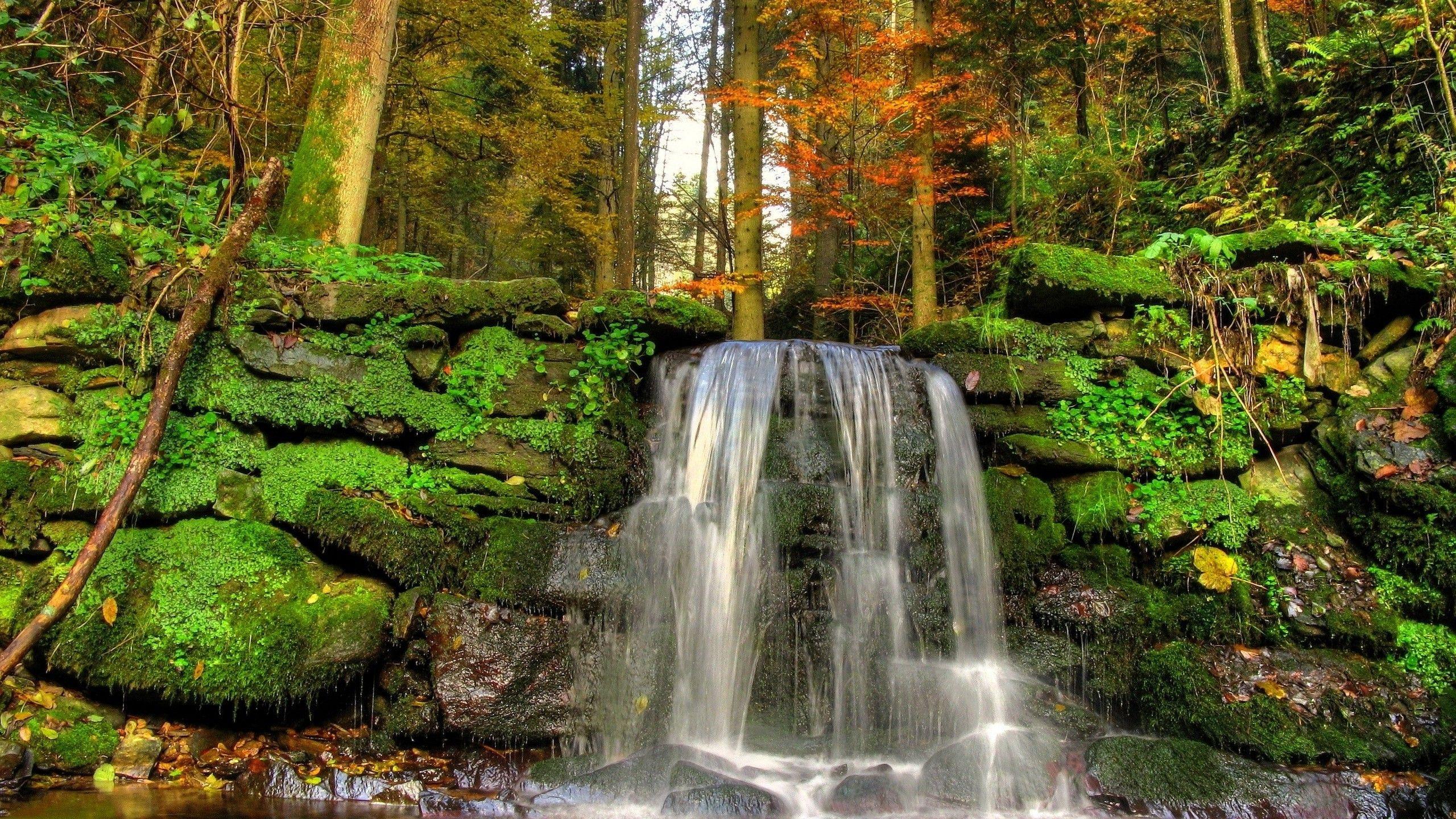 paisajes piedras naturaleza cae vegetación de musgo | Proyectos que ...