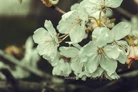 Kartinki Po Zaprosu Tebiet Sekilleri Plant Leaves Plants Blossom