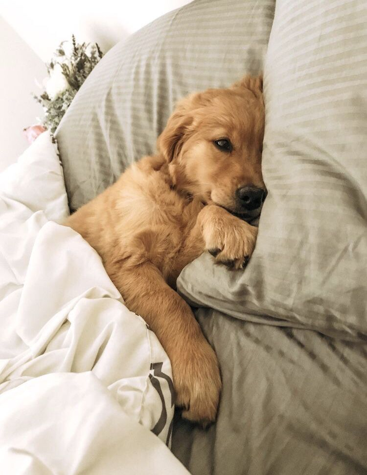 What Do You Expect When You Don T Make Your Bed Puppy Dog