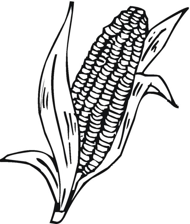 Corn Cob Coloring Page Pictures