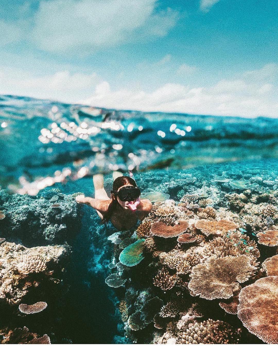 Australia Barrierreef Underwater Ocean Great Barrier Reef Beach Photos Beautiful Places To Visit