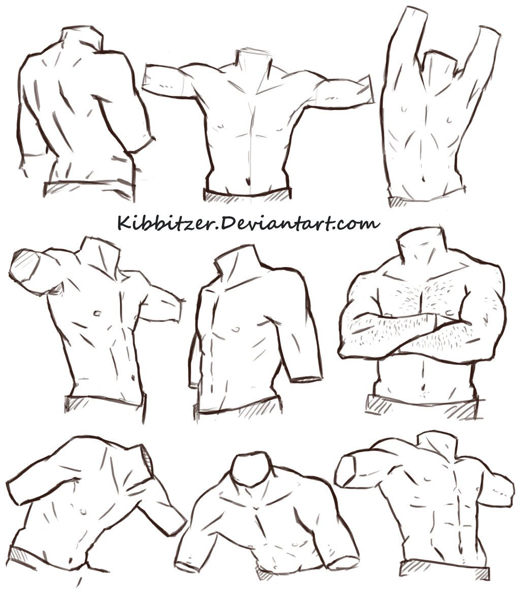 Male Torso Reference Sheet by Kibbitzer.deviantart.com on ...
