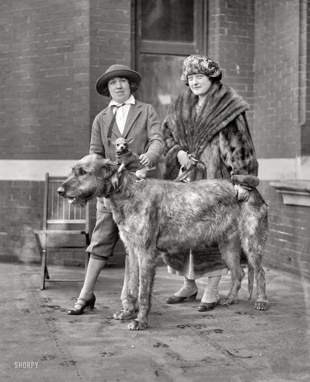 A little dog riding a much bigger dog, 1923 | 20 Adorable Dogs Of The '20s