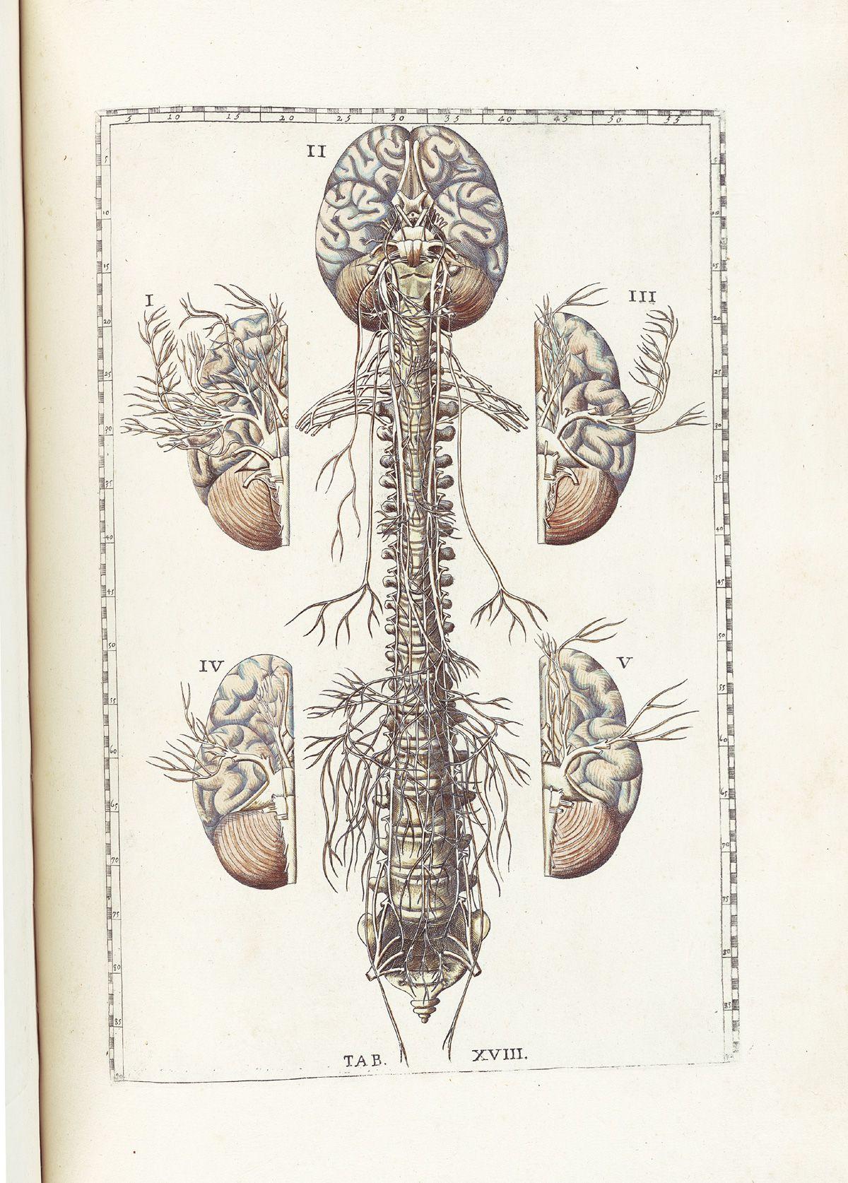 Tabulae Anatomicae Bartholomeo Eustachi