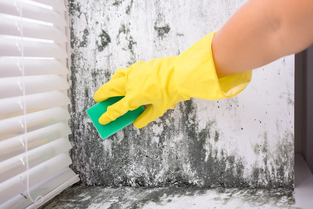 Mold Removal Ways in 2020 Mold remover, Mold remediation
