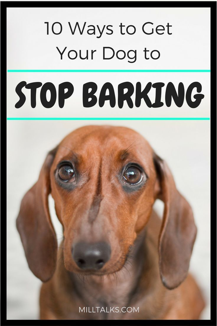 How To Stop Your Dog From Barking Sit Stay Good Girl Dog