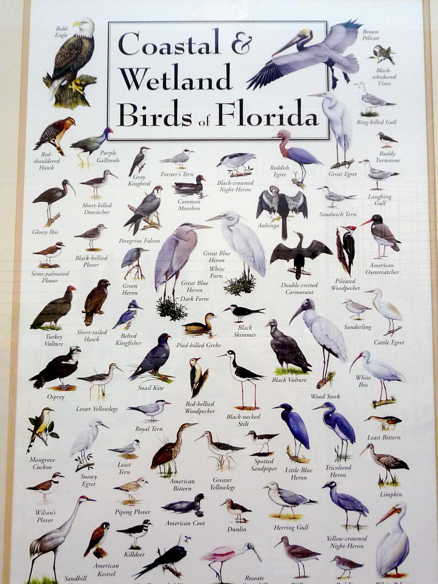 Coastal Amp Wetland Birds Of Florida Shauna Vi Fit Network