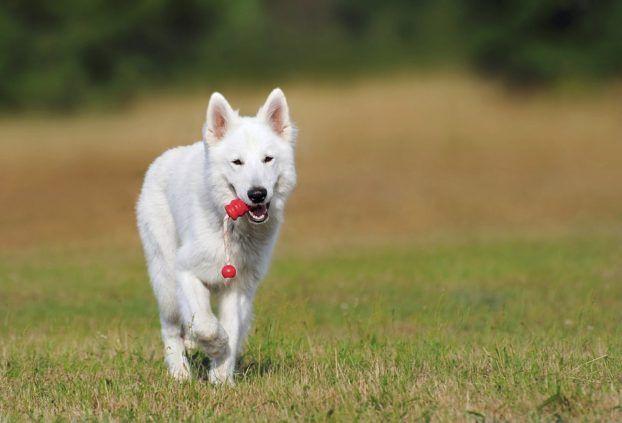 Folgt dein Hund dir ständig ins Bad? Dann will er dir