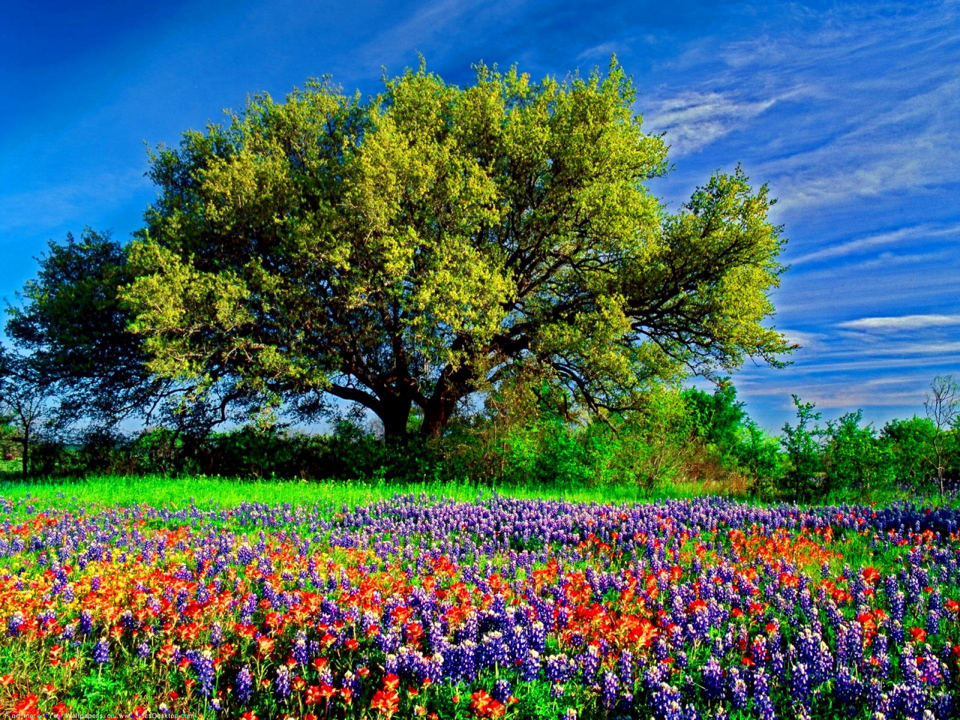 HD Fields Desktop Wallpaper Field Of Flowers