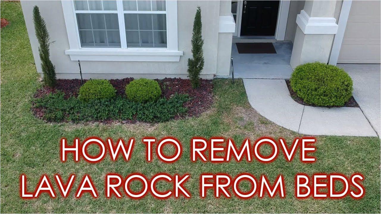How To Remove Lava Rock Amp Prepare Landscape Beds For Mulch Simplistic Volcanic Rock For Landscaping Zo In 2020 Lava Rock Landscape Landscaping With Rocks Landscape