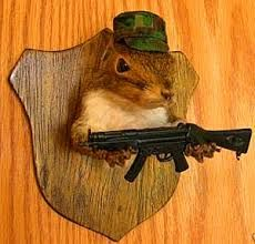 Image result for boomer squirrel