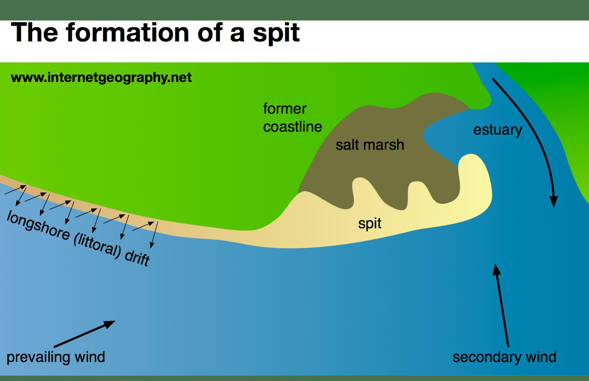 estuary diagram labeled wiring diagram used estuary diagram labeled [ 1207 x 781 Pixel ]