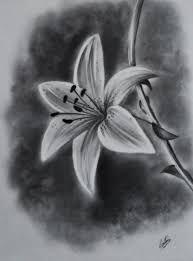 bildergebnis f r lilie bleistiftzeichnung zeichnen. Black Bedroom Furniture Sets. Home Design Ideas