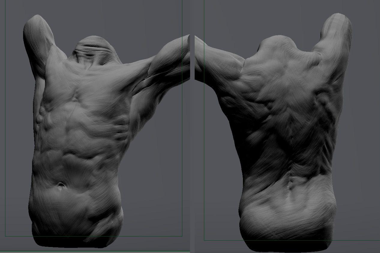 Man\'s Torso Maya | Male torso anatomy study | side torso view ...