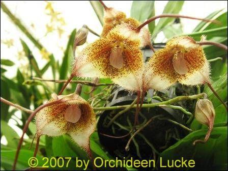 lucke orchideen shop