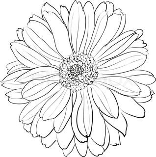 Vector Flowers Black And White Vector Colourbox Flower Art Drawing Flower Line Drawings Chrysanthemum Drawing