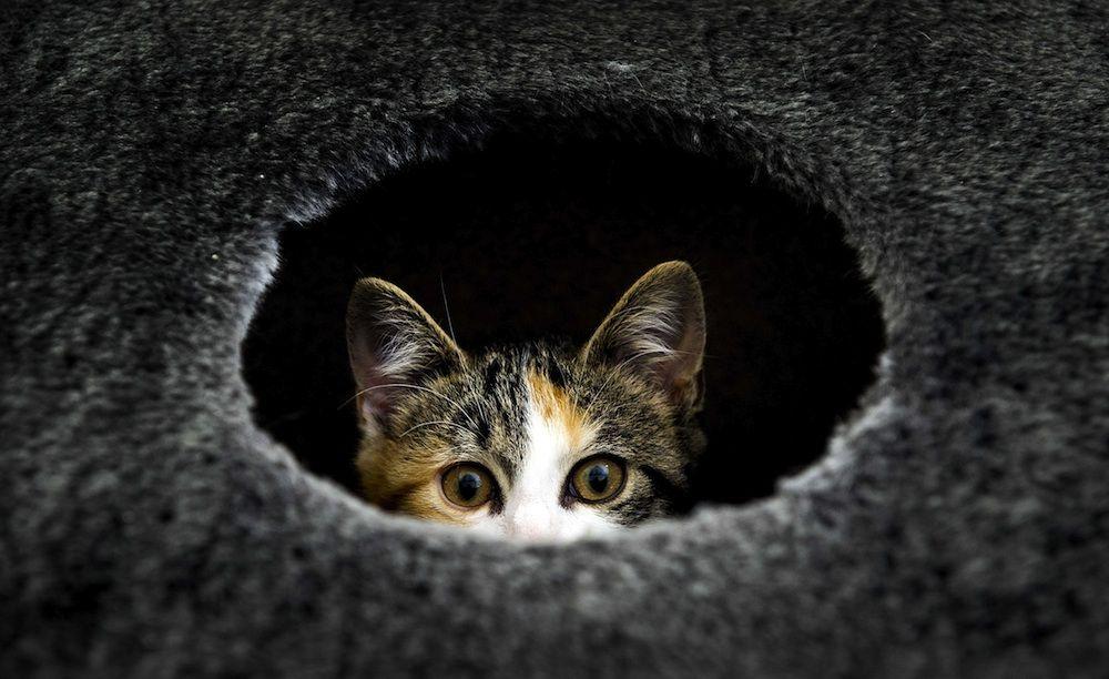 Kissat todella näkevät maailman, joka on ihmisiltä salattu