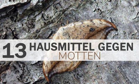 13 Hausmittel Gegen Motten Mit Bildern Hausmittel Gegen Motten Hausmittel Motten Im Kleiderschrank