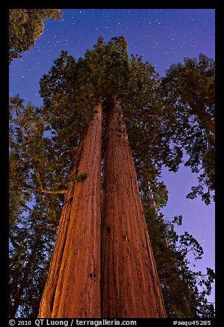 Sequoia National Park,CA
