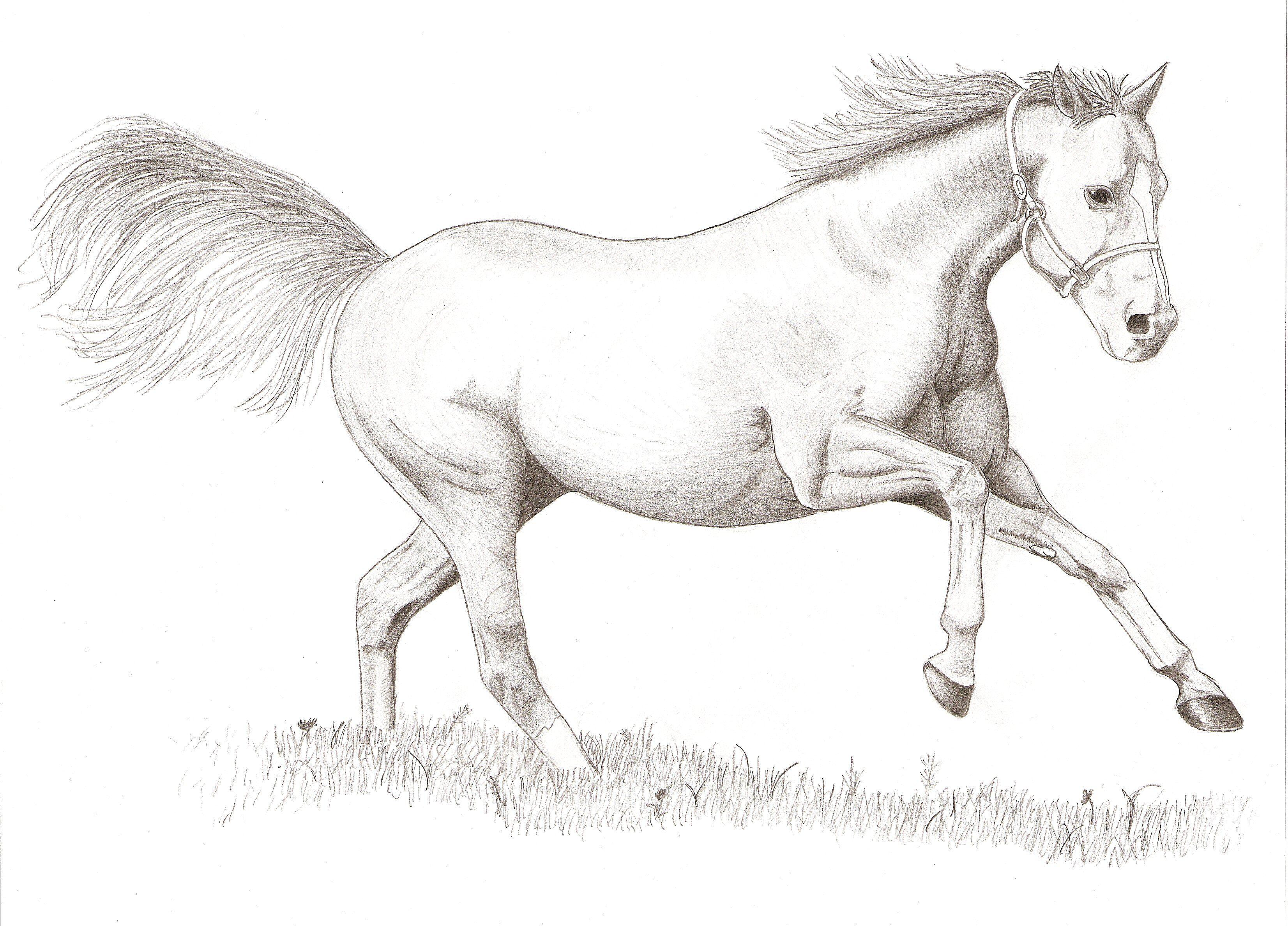 Horse Drawings Easy Horse Drawing Horse Drawing [ 2375 x 3305 Pixel ]