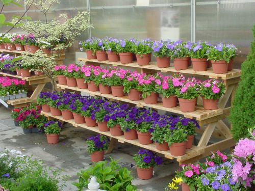 Due to the seasonal nature of our product, each garden center offers different plants. Not all plants are available in all regions at all times. Please contact your local garden center for specific availability. Due to the seasonal nature of our product, each garden center offers different plants.