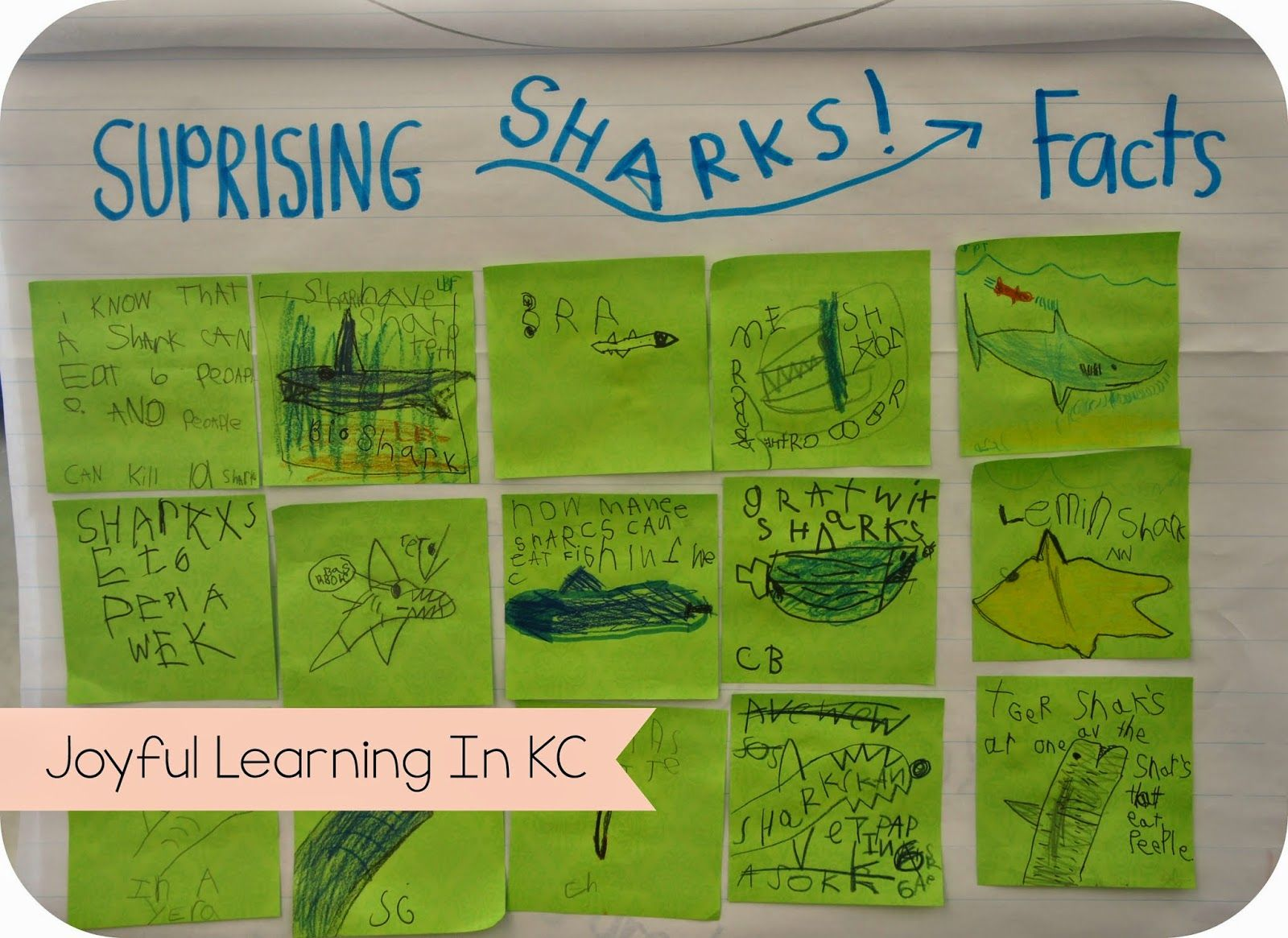 Shark Facts Reading Response In Kindergartn