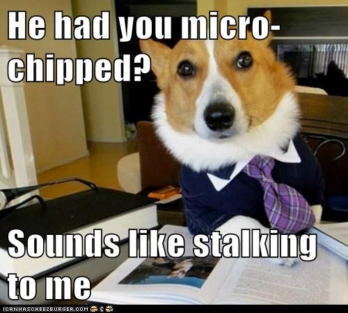 Animal Memes Lawyer Dog We Can Get A Restraining Order Funny