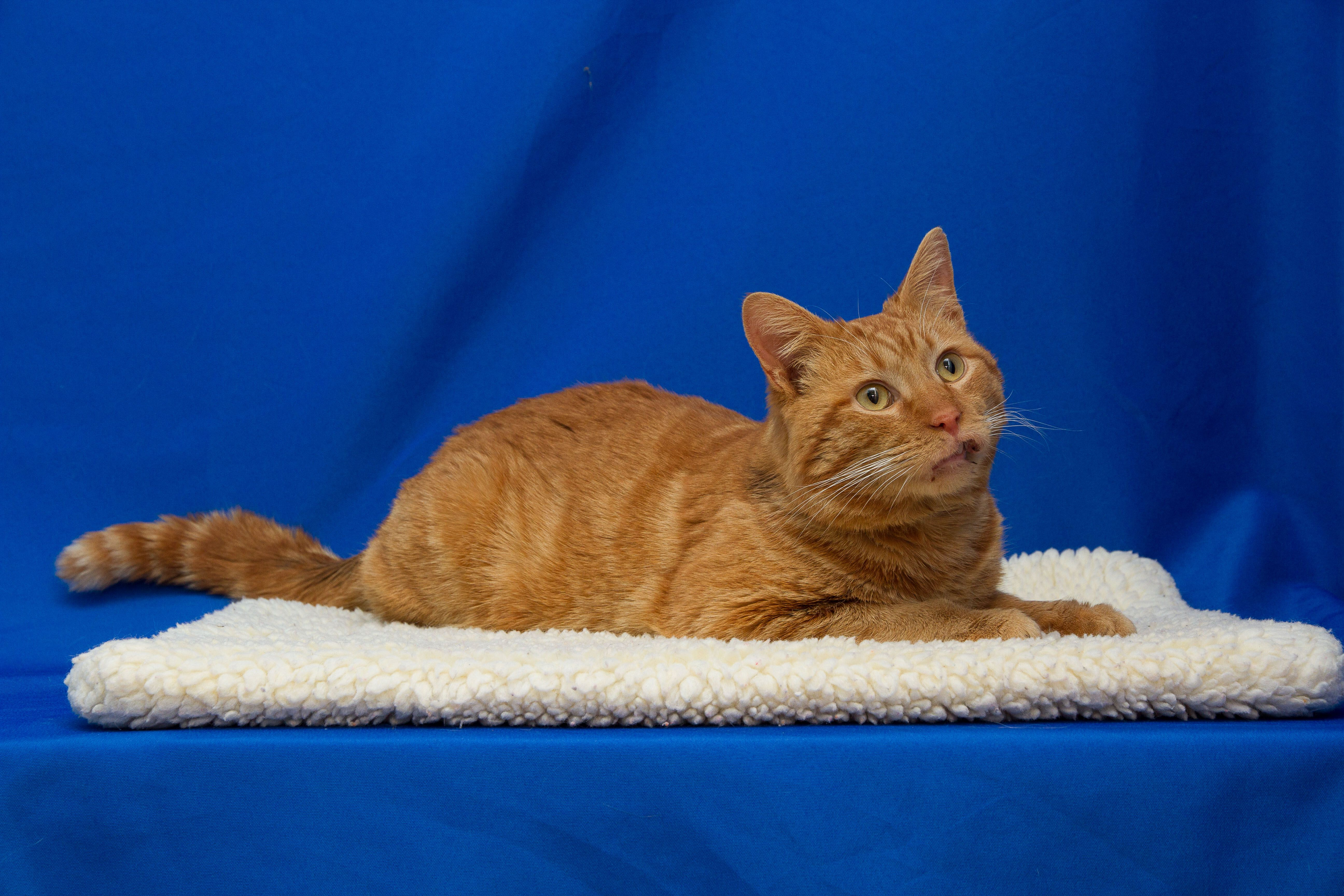 Tabasco Was Hot Stuff Strutting Out Of The Shelter To His New Foreverhome Congrats Opt2adopt Livessaved Humane Society Animals Pets